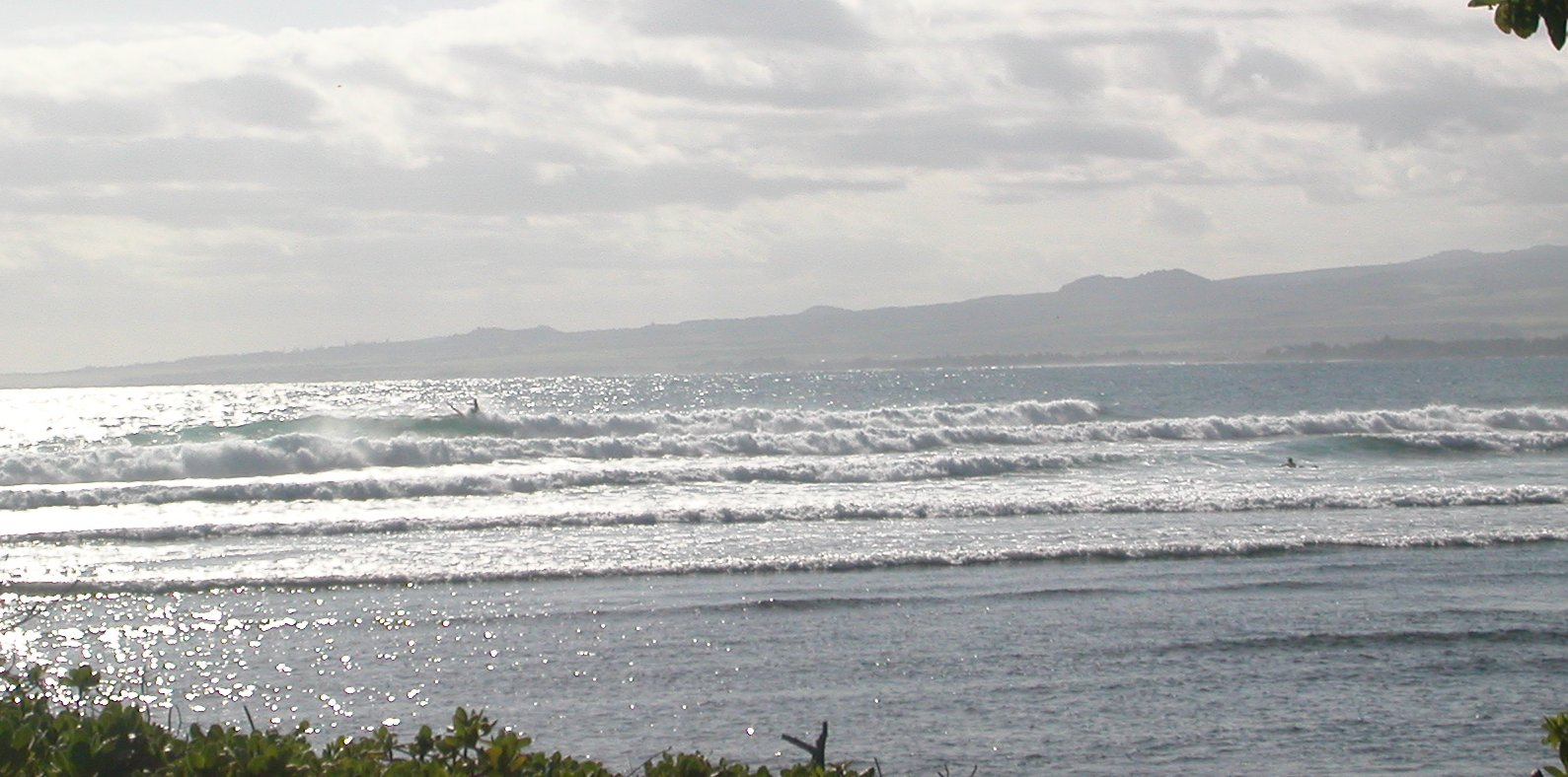 seedicksurf.com - Maui Daily Surf shots and surf report!!